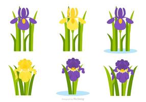 Wohnung Lila und gelbe Iris-Blumen-Vektor-Set