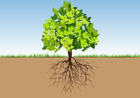 Träd med rötter och blad color vektor