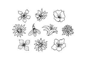 Free Flowers Hand gezeichnet Vektor
