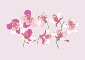 Rhododendron blommor vektor
