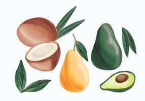 Vector Hand Dragad Avokado, Päron Och Kokosnöt