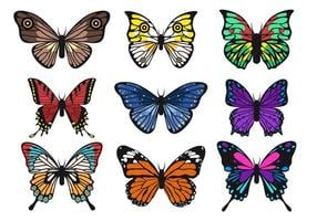 Beautiful Butterfly Vector samlingar