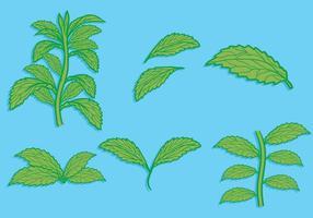Stevia Blatt Hand gezeichnet Illustration gesetzt vektor