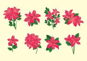 Rhododendronvektor vektor