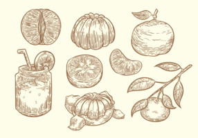 Free Hand Drawn Clementine Vector