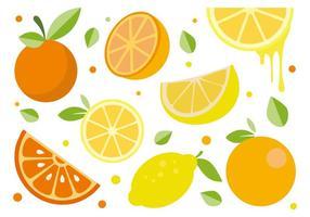 Kostenlose Zitrusfrucht Vektor