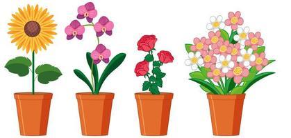 schöne Blumen in Töpfen auf weißem Hintergrund vektor
