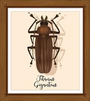 titanus giganteus på träram vektor