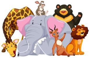 grupp av vilda djur vektor