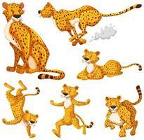 Satz Geparden-Zeichentrickfigur vektor