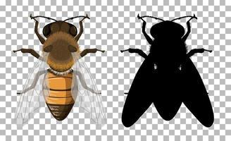 Honigbiene mit seiner Silhouette auf transparentem Hintergrund