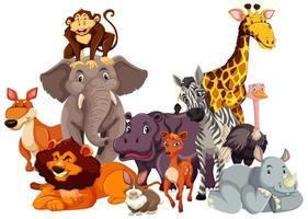grupp av vilda djur