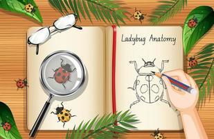 tom boksida på kontorsarbetsöversiktsvy med blad och insekter