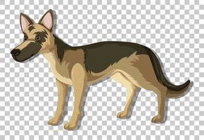Deutscher Schäferhund in stehender Position Zeichentrickfigur lokalisiert auf transparentem Hintergrund