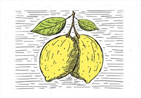 Freie Hand gezeichnete Vektor Zitrone Illustration