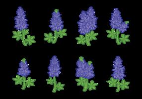 Bluebonnet Blumenvektoren vektor