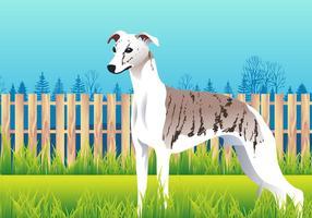 Gullig Whippet Dog Breed Vector