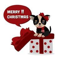 söt chihuahua hund med rosett och halsduk på gåva
