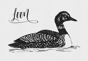 Vector schrullige Zeichnung eines Loon Bird