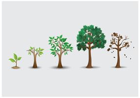 Gratis Tree Lifecycle Vector