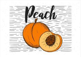 Free Vector Hand gezeichnet Pfirsich Illustration