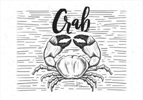 Freie Vektor Hand gezeichnete Krabbe Illustration