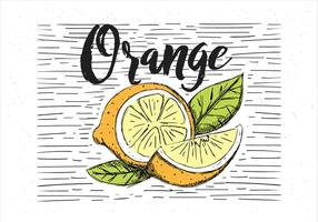 Gratis Vektor Handdragen Orange Illustration