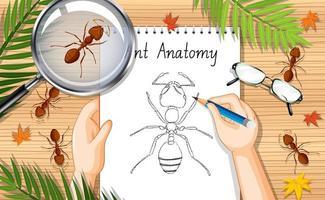 Draufsicht Arbeitstisch mit Ameisen und Ameisenzeichnung