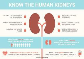 Njurar Fakta och sjukdomar Vector Infographics