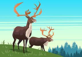Bull caribou vektor