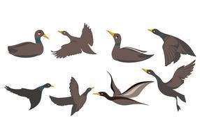 Freier Loon oder Taucher Vogel Vektor