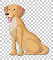 gul labrador retriever i sittande ställning seriefigur isolerad på transparent bakgrund vektor