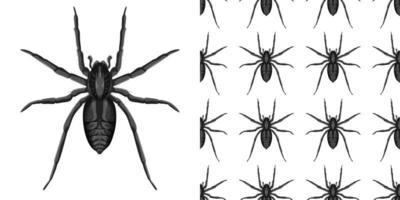 Spinneninsekten lokalisiert auf weißem Hintergrund und nahtlos vektor