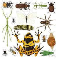 uppsättning olika insekter på vit bakgrund