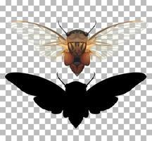 Zikade auf transparentem Hintergrund