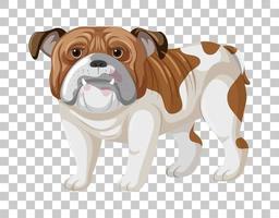 braune weiße Bulldogge in stehender Position Zeichentrickfigur lokalisiert auf transparentem Hintergrund