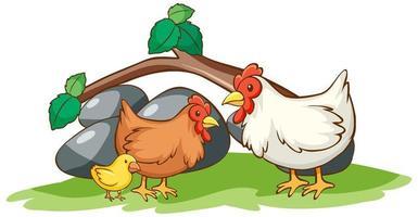 isoliertes Bild von Hühnern im Garten vektor