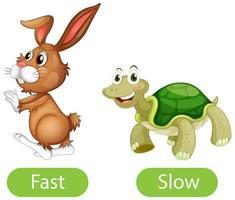 entgegengesetzte Adjektivwörter mit schnell und langsam vektor