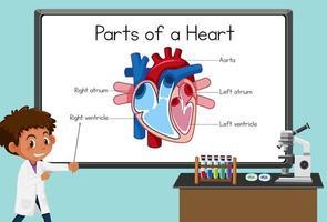 junger Wissenschaftler, der Teile eines Herzens vor einer Tafel im Labor erklärt