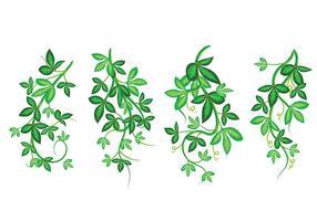 Set med vacker vektor konst illustration, Poisson Ivy med gröna blad, ramad mönster