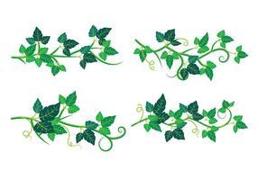 Set von Poison Ivy Pflanze vektor