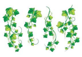 Klättring Poison Ivy Plant isolerad på vit bakgrund