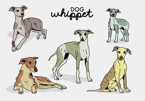 Whippet hund poserar handritad vektor illustration
