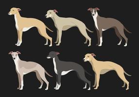Whippet hund vektor samlingar