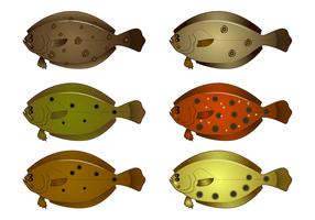 Realistischer Flounder-Vektor vektor