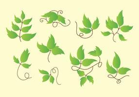 Poison Ivy Icons vektor