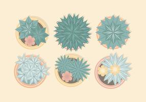 Vektor från ovan krukväxter