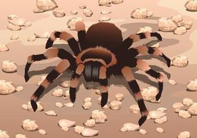 Tarantula auf Kiesvektor