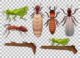 Satz von verschiedenen Insekten lokalisiert auf transparentem Hintergrund