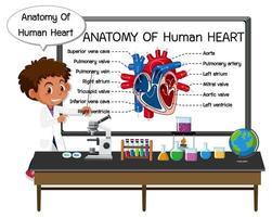 informationsaffisch av mänskligt hjärtdiagram